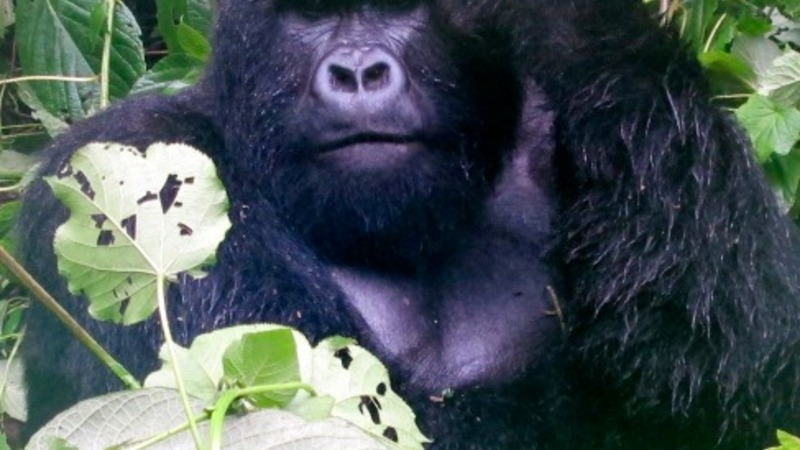 Netflix backs 'Virunga' in fight for the Oscar