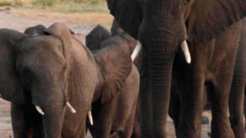 'Problem elephants' unite against terrorism