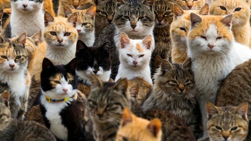 A corner of Japan where cats rule