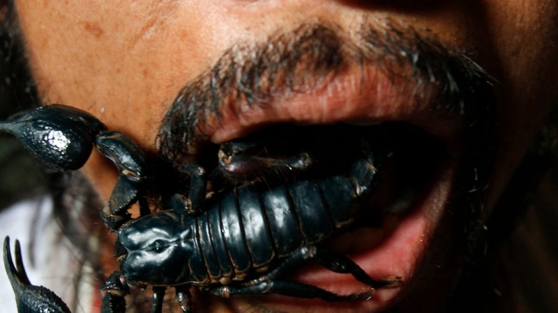 A new look for Bangkok's creepy crawly grub