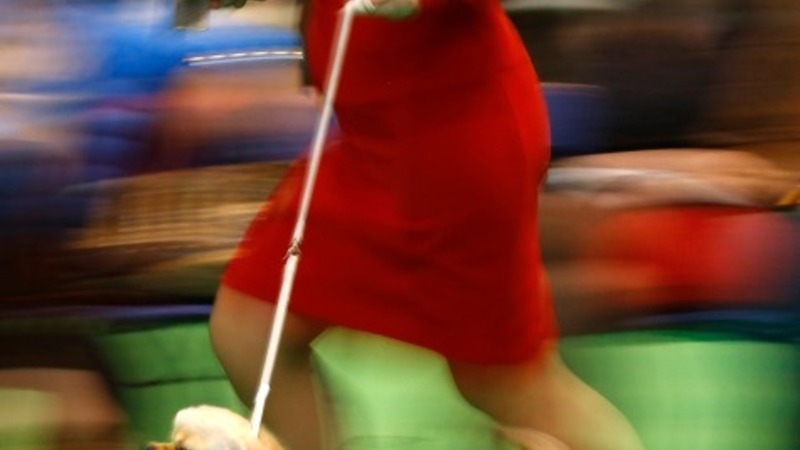 Canine competition begins at Crufts