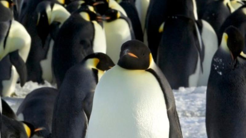 Walk like a duck, waddle like a penguin