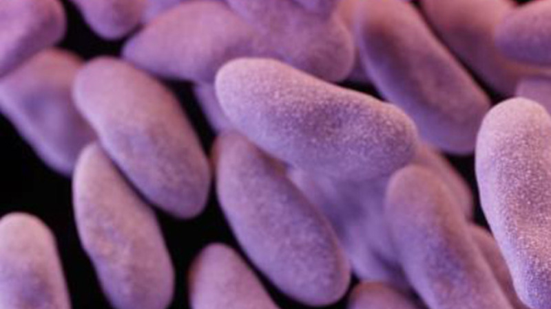 White House unveils plan to combat superbugs
