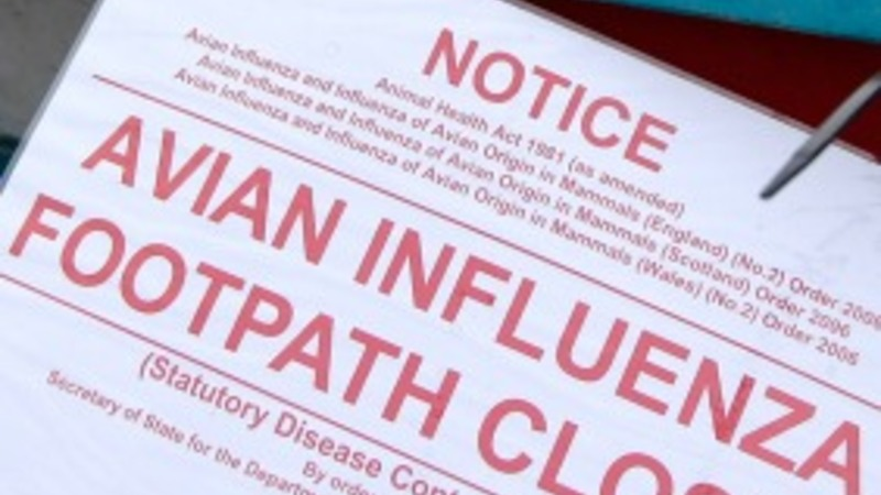 Iowa farm hit with worst bird flu outbreak yet