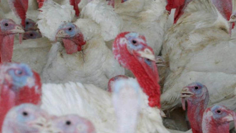 Bird flu sparks state of emergency in Iowa