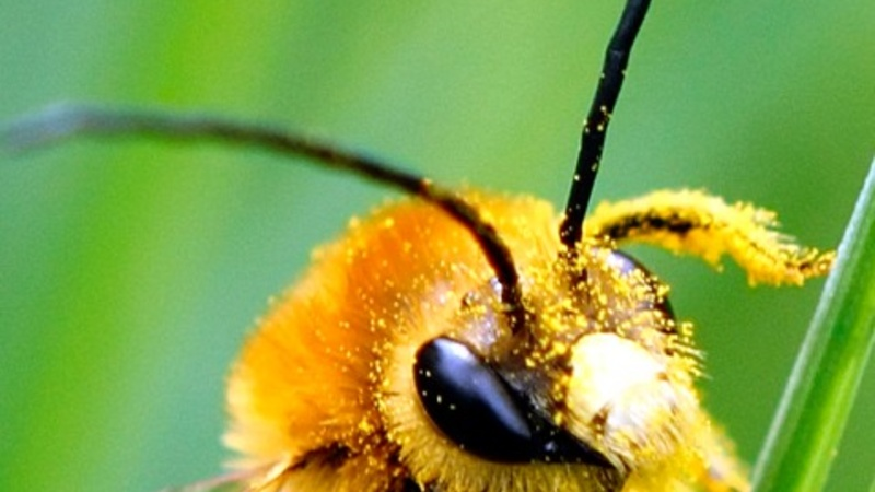 U.S. honeybee die-off accelerates over last year