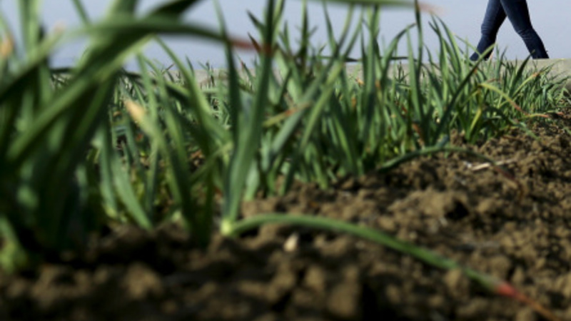 Some California farmers agree to water cutback