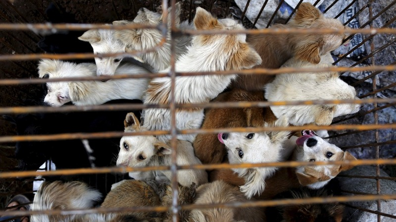 Dog meat festival sparks outrage in China