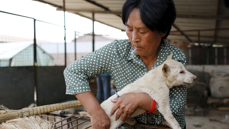 Standing up for man's best friend in China