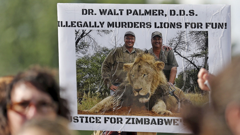 U.S. searching for lion-killing dentist