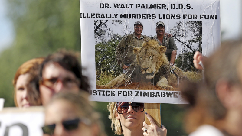 Tenuous legal ground to punish Cecil's killer