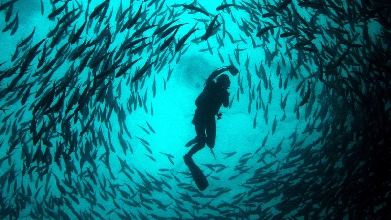 Freediving champion feared dead