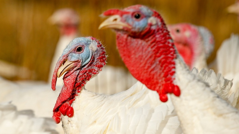 Bird flu is over but the price shock is not