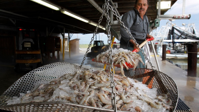 Gulf Coast shrimpers fear Obama's trade deal