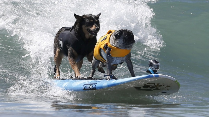 IN PICS: Dogs ride the waves in California