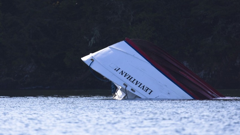 Whale watching tragedy: Boat stability probed