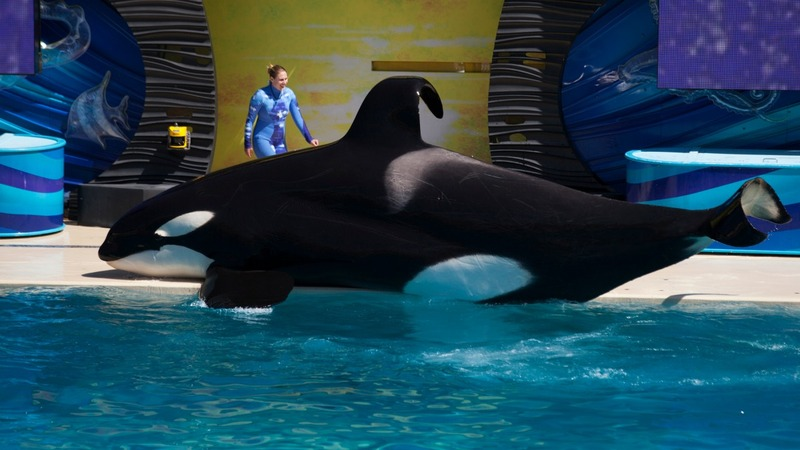 SeaWorld to stop San Diego orca shows