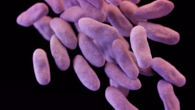 New bug brings 'antibiotic apocalypse' nearer