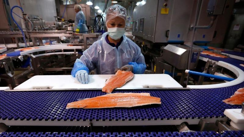 FDA okays first GMO animal for food