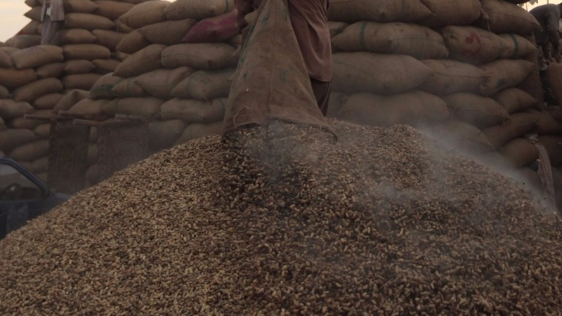 Peanut glut could cost U.S. taxpayers