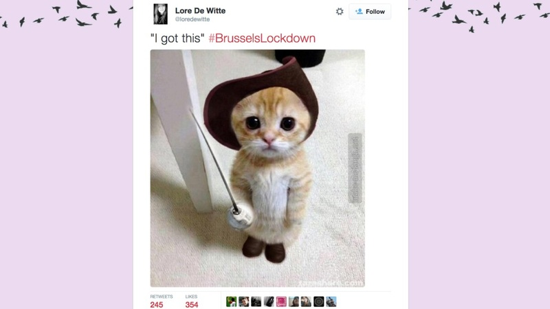 Belgians use cats to fight terror on Twitter