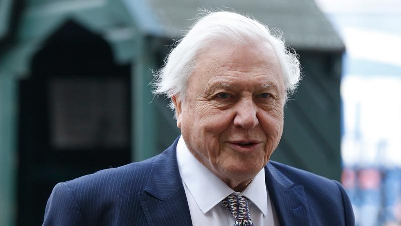 VERBATIM: Attenborough fears for coral reefs