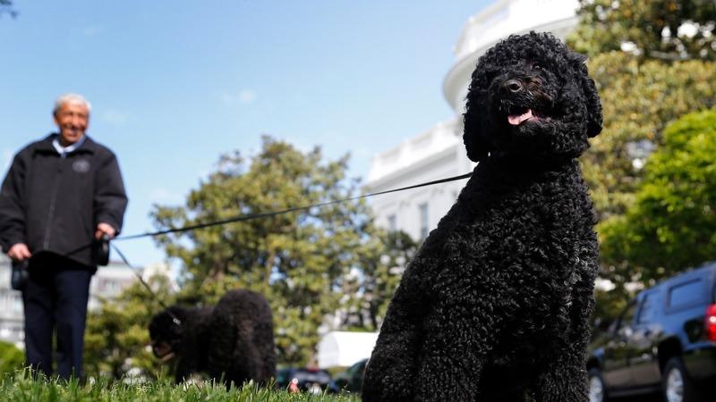 Feds thwart plot to kidnap Obama's dog