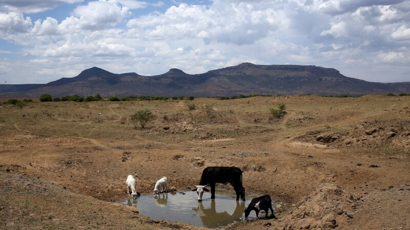 South Africa facing driest year on record