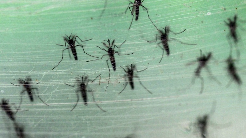 Zika virus could spur CDC travel warning