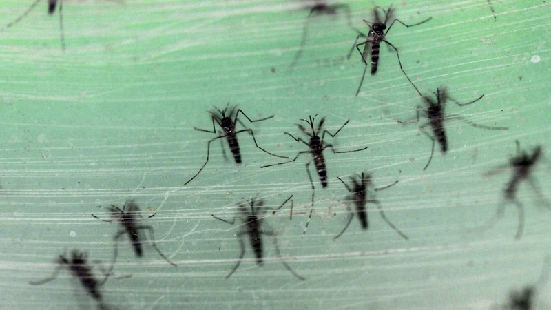 CDC issues travel warning over Zika virus