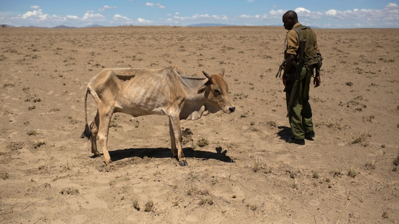 WFP: Ethiopia drought relief needs $500 mln