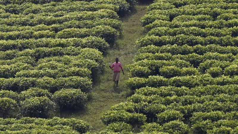 Amnesty spots mass graves in Burundi