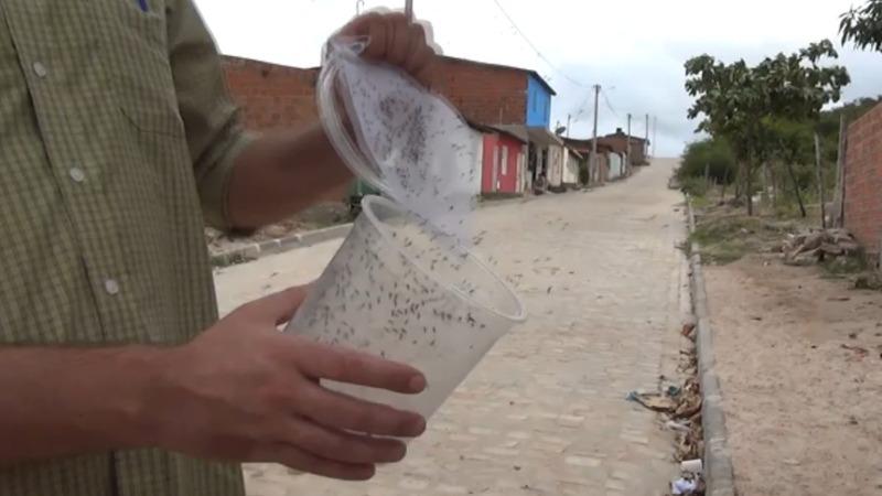 Engineering a mosquito to help fight Zika virus