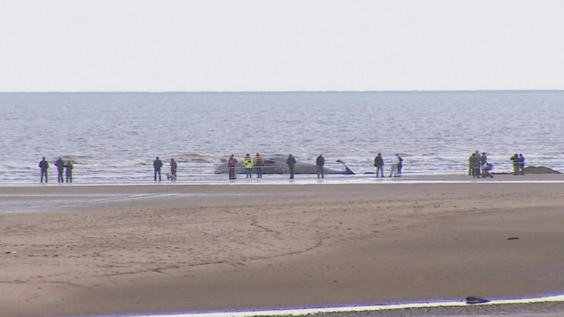 29th stranded whale dies on European shores