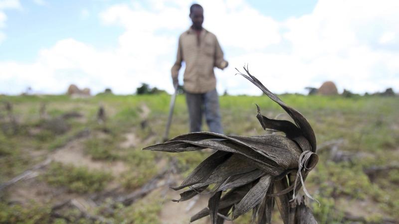 Zimbabwe's Mugabe declares drought disaster