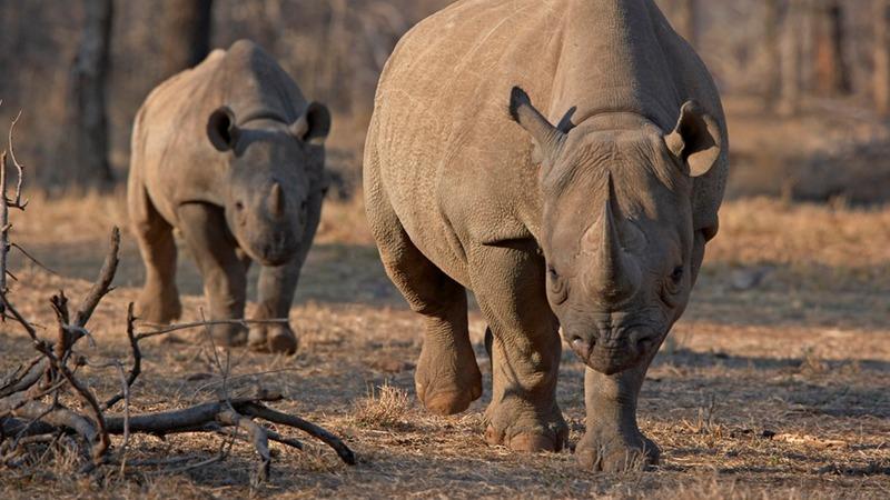 Tanzania fights poaching with anti-terror squad