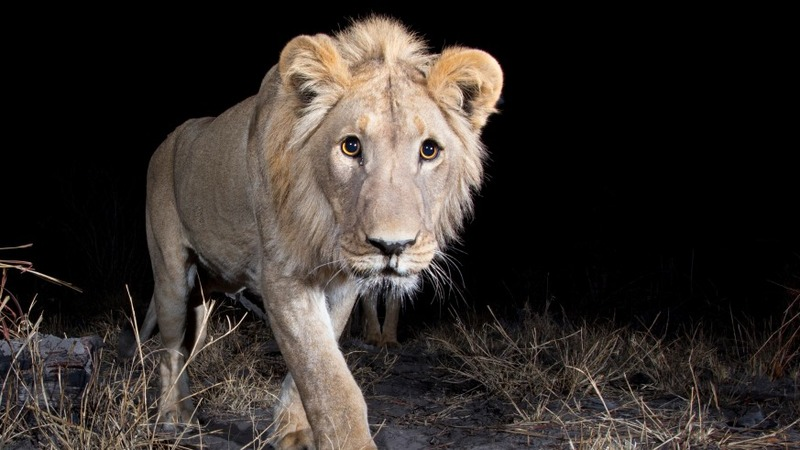 Caught on camera: Africa's most elusive
