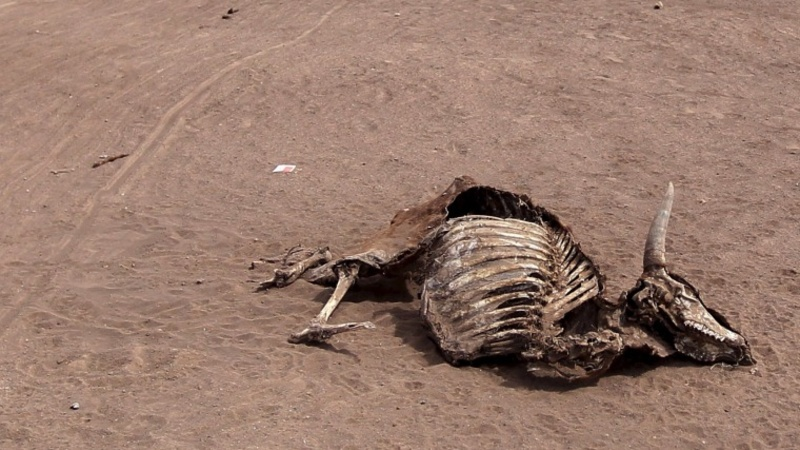 Animal charity condemns Ethiopia drought response