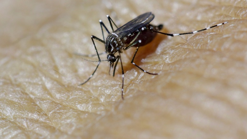 Scientists link Zika with rare neurological illness