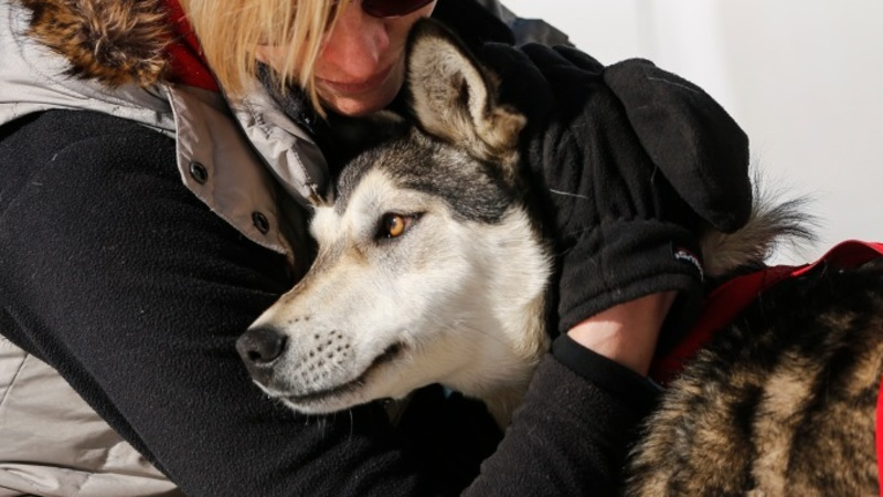 Man arrested for dog attacks during Iditarod