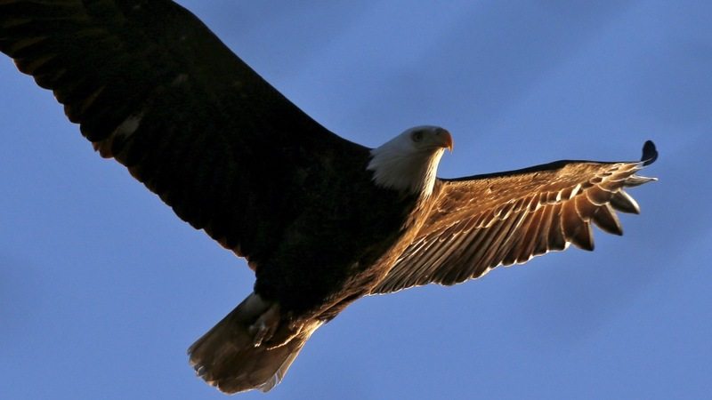 InSight: Baby eagle hatches in Washington, D.C.