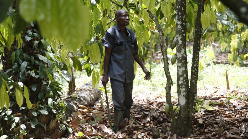 Nigeria's cocoa farmers waiting for help