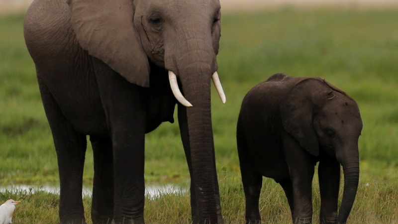 Kenya to burn ivory in bid to end poaching