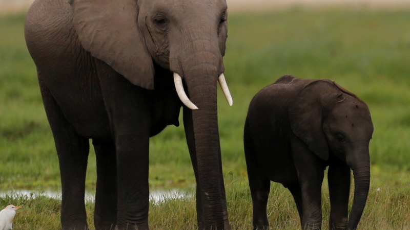 Kenya to burn ivory in bid to end poaching
