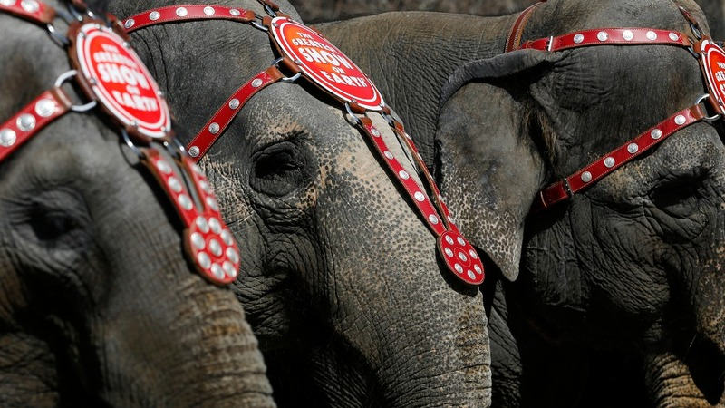 Elephants take final bow at Ringling Bros.
