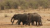 Drought-hit Zimbabwe sells it's wild animals