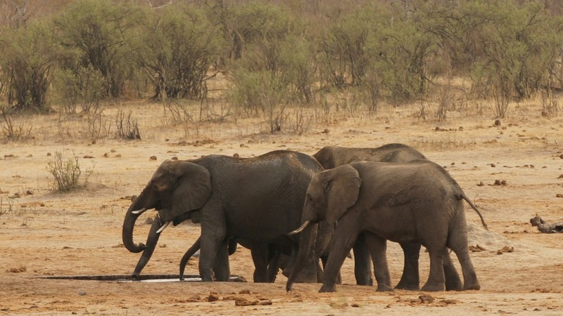 Drought-hit Zimbabwe sells it's wild animals