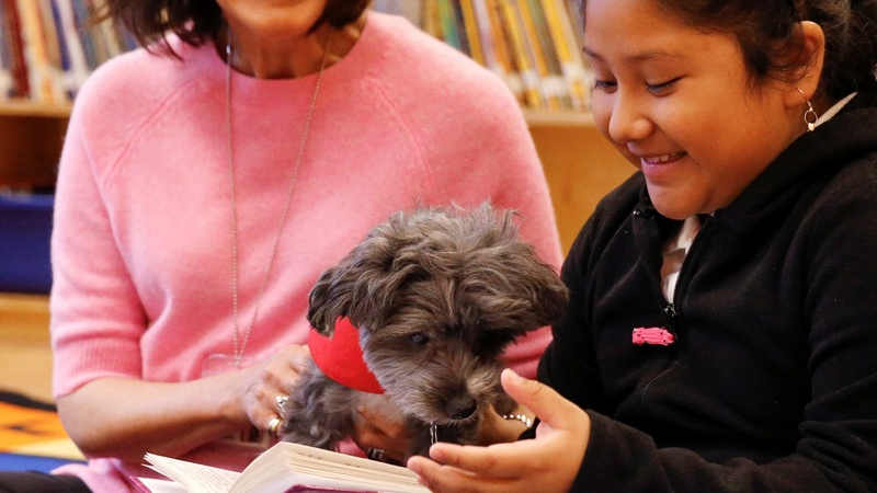 Therapy dogs help immigrant kids clear reading hurdles