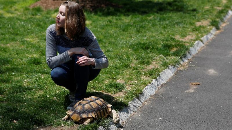 INSIGHT: A tortoise strolls through Central Park