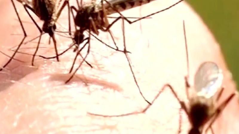 VERBATIM: Zika is 'unprecedented and tragic'